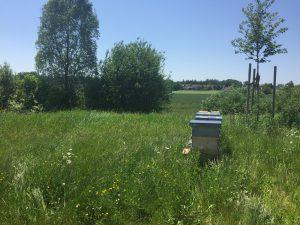Bienen am Bauhof